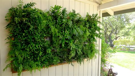Plants On Walls Vertical Garden Systems May 2012 Plants For Garden Walls