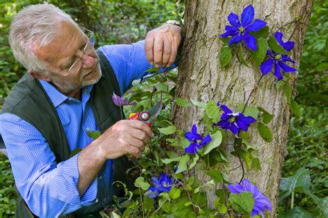 corsi di giardiniere formazione e lavoro corsi di giardinaggio con il