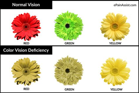 what does color blindness look like color blindness or color vision deficiency causes symptoms