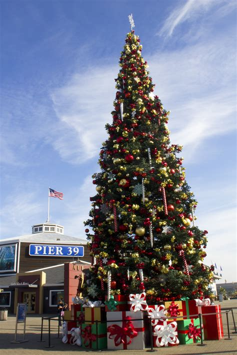 christmas tree lots in san franciso tree sf mobawallpaper