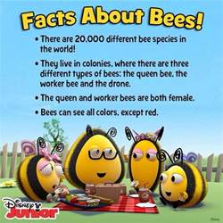 five bizzy honey bees the and factual of the honey bee captivating educational and fact filled picture book about bees for toddlers children and adults books best 25 bee facts ideas on honey bee facts