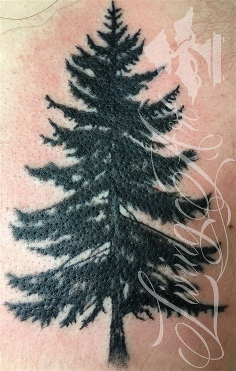 spruce tree tattoo 100 spruce tree watercolor evergreen tree