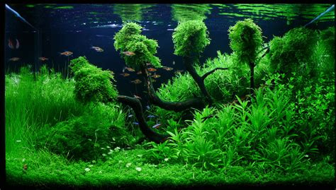 aquascape gallery aquascape gallery quot my life my story quot