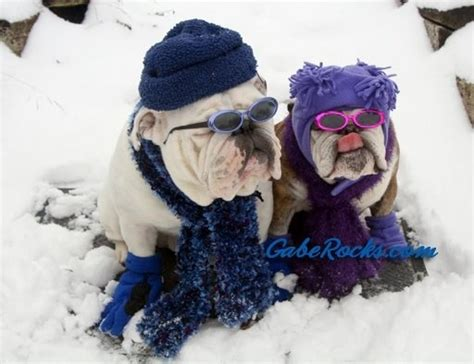 Pet Rock Snowy 30 best images about the militaryoneclick mascot bulldog on pets rock roll