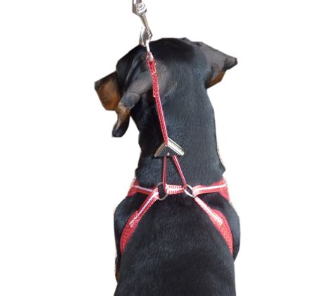no pull harness pink small harness get free image about wiring diagram