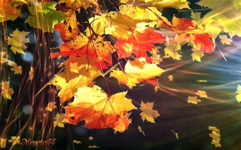 imagenes invierno movimiento 32 im 225 genes animadas hojas de oto 241 o 1000 gifs oto 209 o