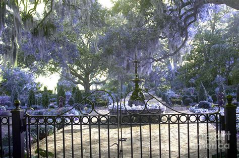beaufort south carolina dreamy purple lilac garden gates