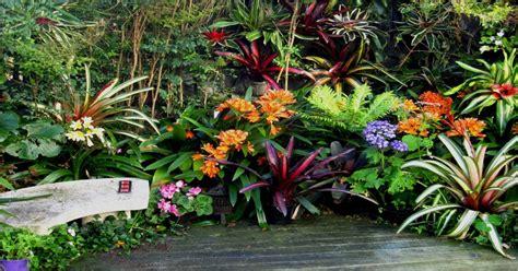 Vertical Garden Nz Hanging Gardens Vertical Gardens Bromeliads For Shade