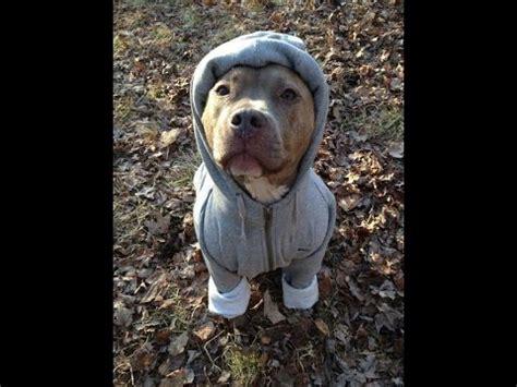 pitbull clothes 1 67 mb free pitbull mp3 mp3