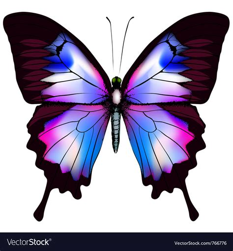Images Of Beautiful Butterflies beautiful butterfly royalty free vector image vectorstock