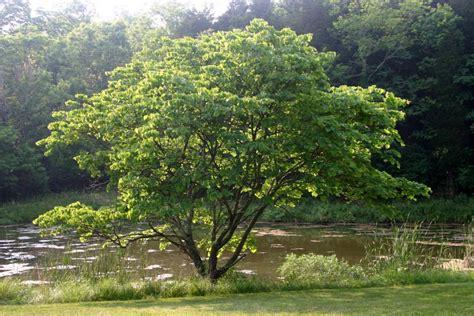 redbud seasons summer shutterbug