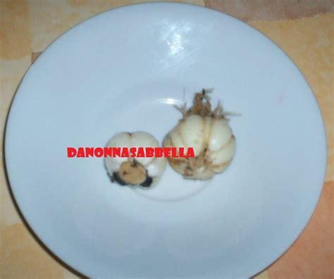 aglio in vaso da nonna sabbella il mio primo aglio in vaso