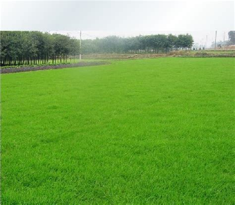 online buy wholesale grass seed prices from china grass