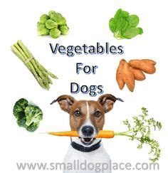 vegetables i can feed my dog what is the best food to feed your dogs html autos