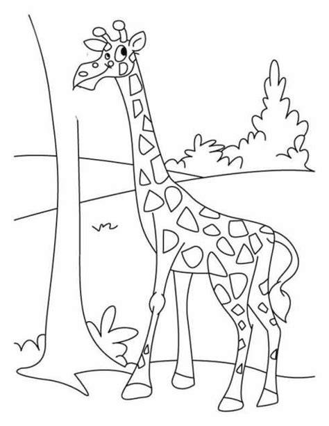 mewarnai gambar binatang sketsa hewan related keywords sketsa hewan long tail