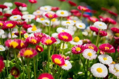 colourful group of flowers photo free download