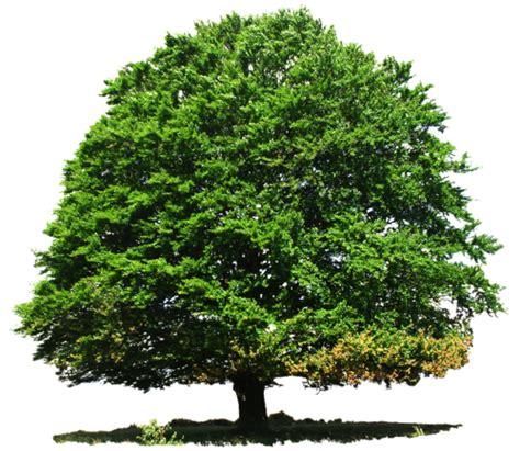 tree images tree png transparent image pngpix