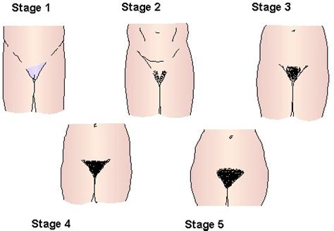 photos of male pubic hair during puberty puberty 0610163elearning blog