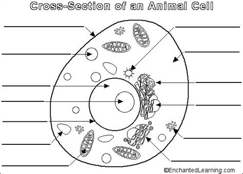 printable animal and plant cell printable plant and animal cell plant and animal cell