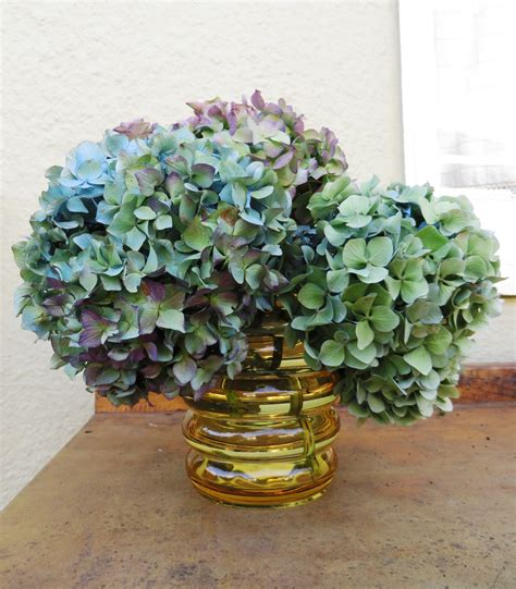 Can You Cut Hydrangeas For A Vase by Flower Arranging With Hydrangeas Sweet Cottage