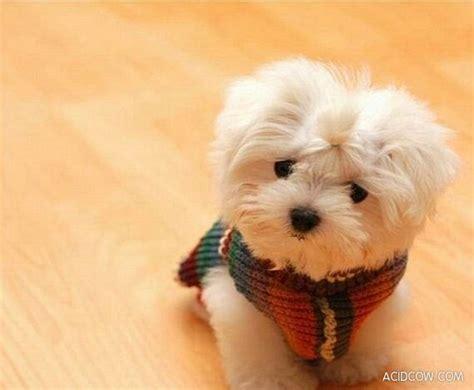 imagenes tiernas de perritos imagenes super tiernas de perros y gatos los 20 mejores