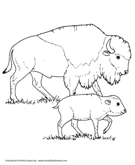 north american animals coloring page wild animal coloring pages bison mother and calf