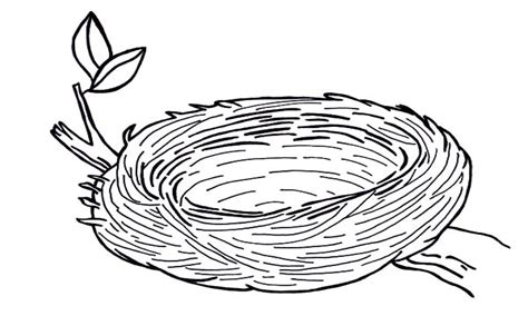 Coloring Page Nest by Empty Bird Nest Coloring Page And Grig3 Org