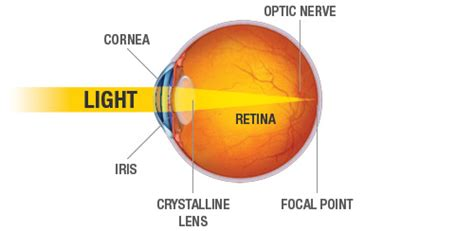 how does light pass through the eye understanding your eyes lasik eye surgery los angeles