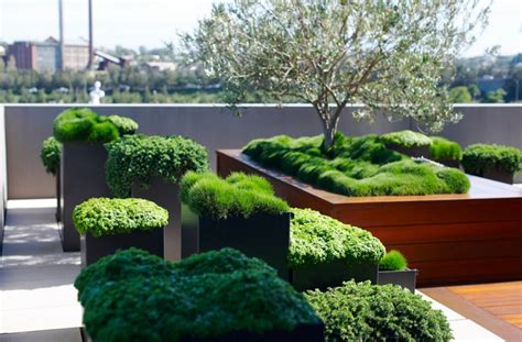 create   urban oasis  plants
