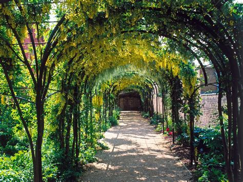 arch for climbing plants choosing plants for arches and pergolas hgtv