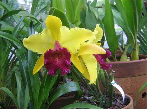 Tanaman Hias Gantung Episcias Ungu Tua macam macam dan jenis bunga anggrek yang ada di indonesia