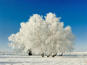 Winter Tree by Winter Trees Wallpapers Wallpaper Cave