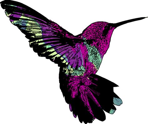 hummingbird pattern on behance