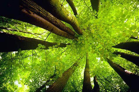 imagenes zen fondo pantalla fondos de pantalla de naturaleza medioambiente y naturaleza