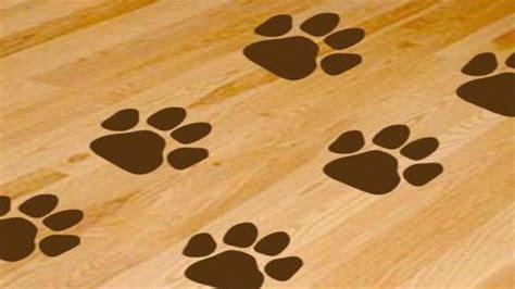 dog print wallpaper dog paws wallpaper wallpapersafari