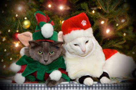 images of christmas cats free christmas desktop wallpapers christmas cats desktop