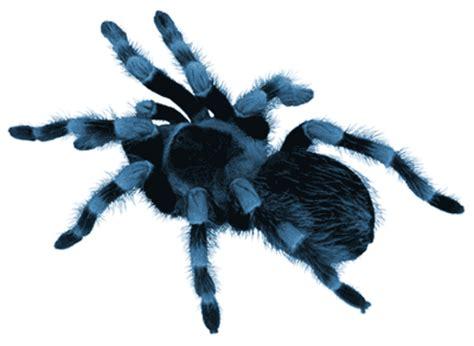 Set Spider Blue hugo spiderblue22