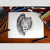 Half Lion Half Tiger Art | 320 x 234 jpeg 19kB