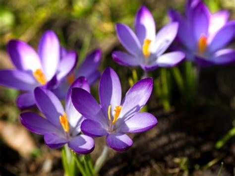 bloemen stoelinga bloembollen en zaden assortiment bloemisterij