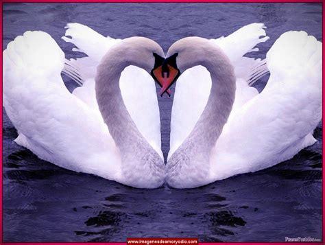 imagenes animadas de amor sin letras imagenes tiernas de amor sin frases para personalizarlas