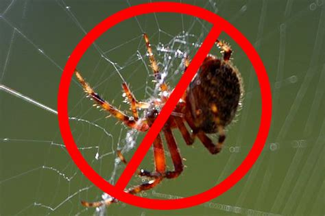 stoltzfus structures 10 tips to keep bugs and critters