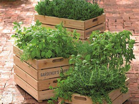 herb container garden combinations fragrant herb container combinations hgtv