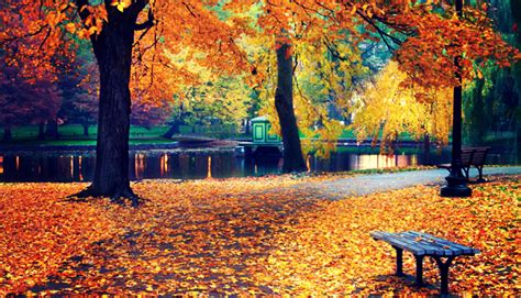 fall is here luwak