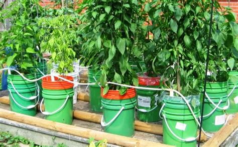 Sub Irrigated Planter System by Irrigation Systems Five Gallon Ideas