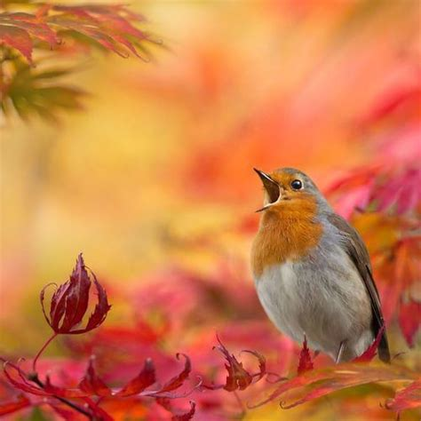 autumn song image 3476457 by rayman on favim com