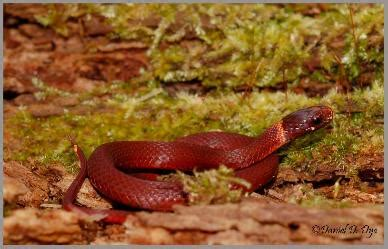 poisonous snakes  florida phillips natural world