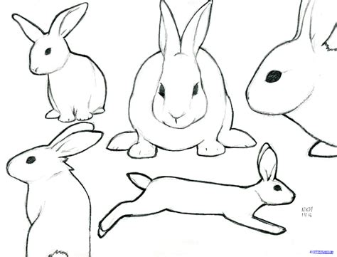 let s draw bunnies 35 step by step bunny drawings books how to sketch a rabbit step by step forest animals