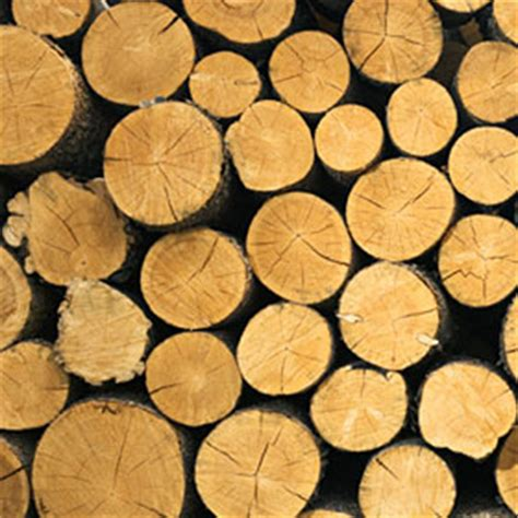 Paper From Wood - careers in forestry resources wood and paper