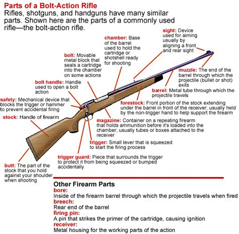 gun diagram gun barrel diagram gun free engine image for user manual