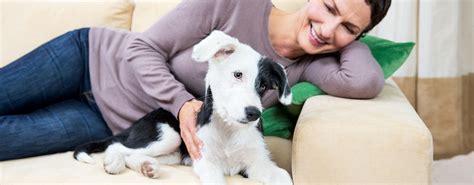 Ein Hund Zieht Ein Activet Tierarztpraxis Meines